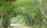 greentrees